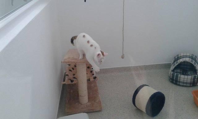 pensiune animale11