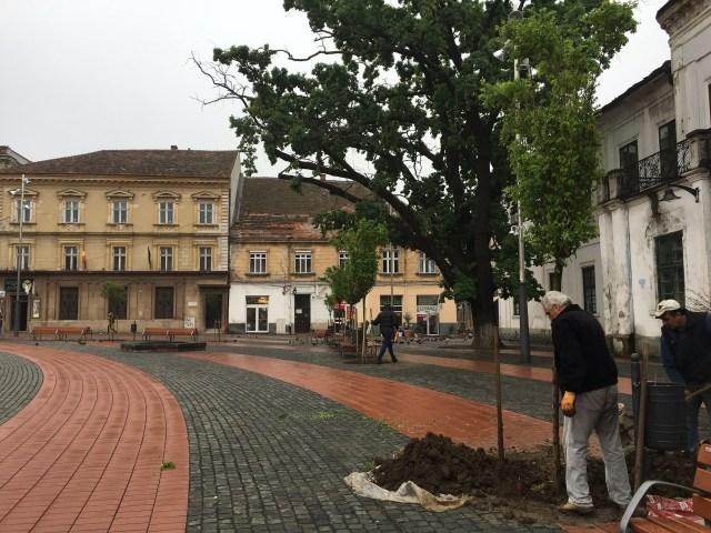 copaci libertatii2