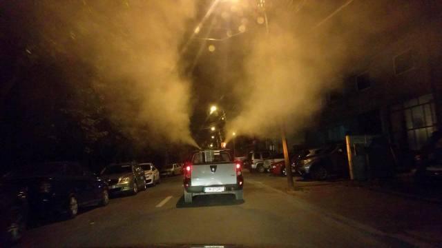 Primăria Timișoara începe dezinsecția și deratizarea