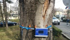 Tomograf de copaci