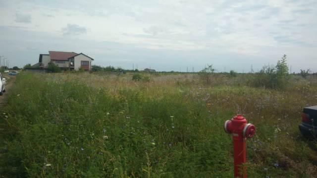 Lupta cu ambrozia continuă la Timișoara