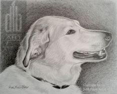 JOANNE'S DOG