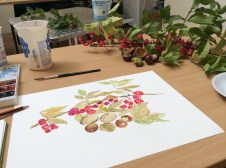 watercolour conkers and spindle