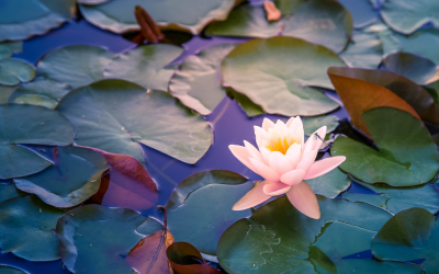 Creating Joy in the Chaos – Getting started with Feng Shui