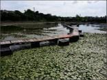 南生圍豆腐花店後的池塘
