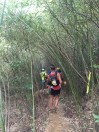 長達近1公里的竹林隧道