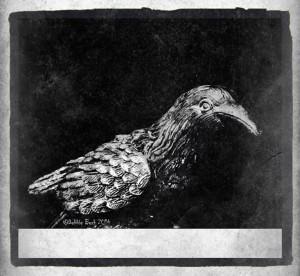 shadow-crow-2