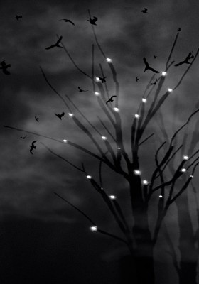 tree-sky-birds