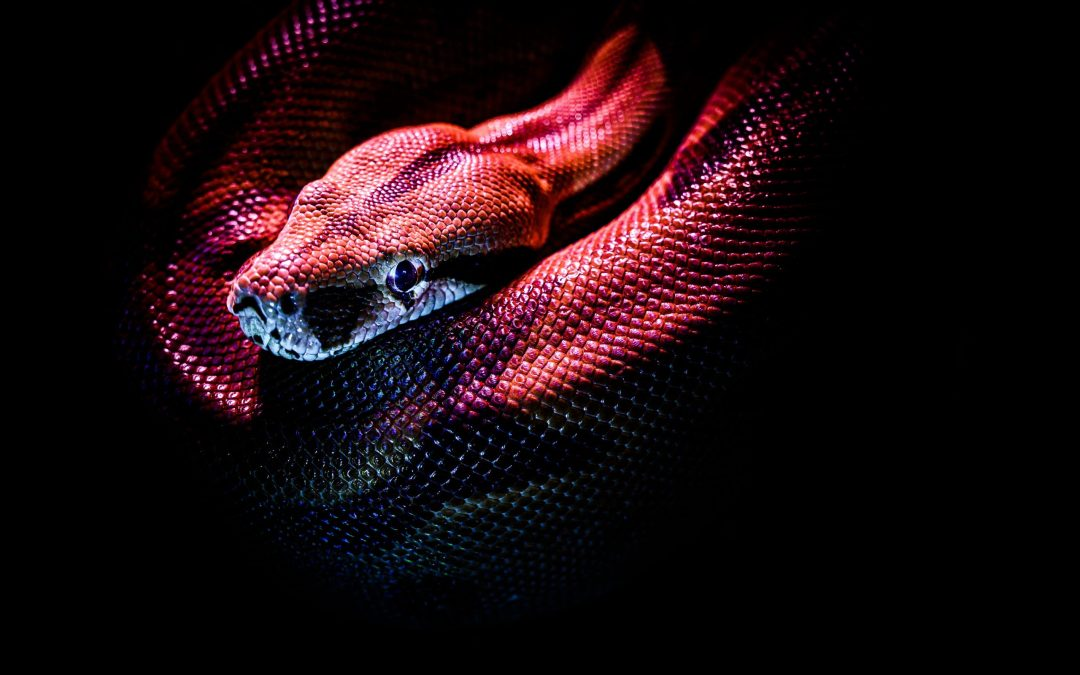A snake sheds its skin to survive.