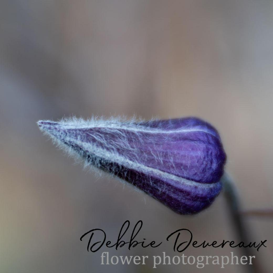 Sugarbowls -Image Copyright Debbie Devereaux