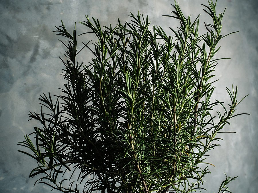 Rosemary-Eucalyptus Stress Spray