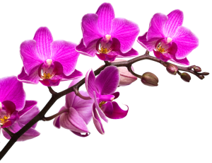 flower image2 - flower-image2