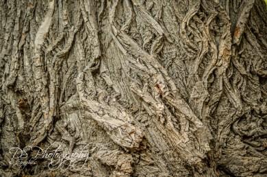 Weekly Photo Challenge: Texture - 5