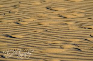 Weekly Photo Challenge: Texture - 3