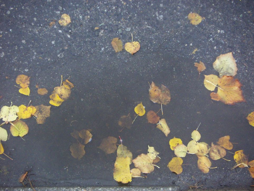 Puddle_in_depression_on_street