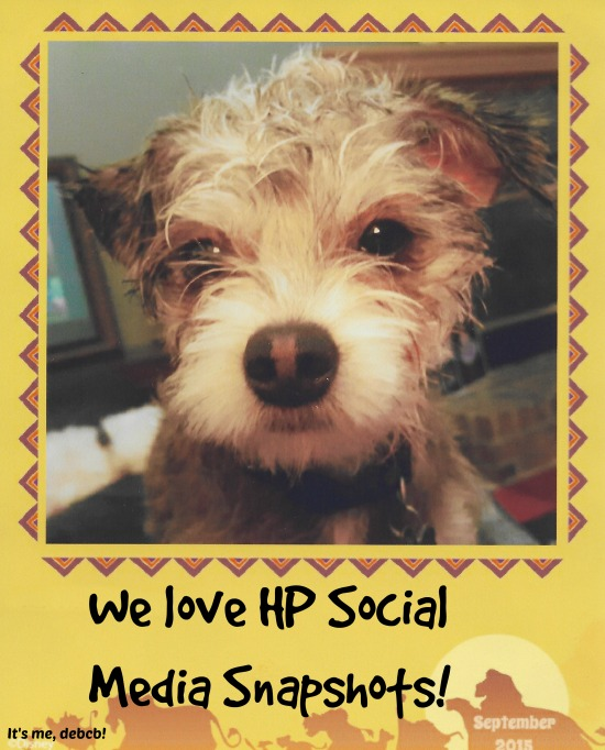 We love HP Social Media Snapshots