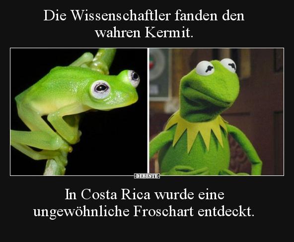 Pin Auf Kermit