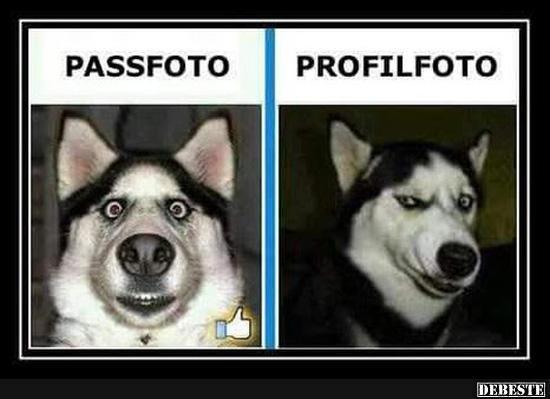 Passfoto Profilfoto Lustige Bilder Spruche Witze Echt Lustig