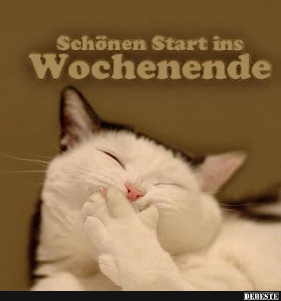 Schonen Samstag Katze Bilder Und Spruche Fur Whatsapp Und