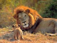 Tributo a Cecil, el rey león abatido
