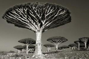 Una mujer dedica parte de su vida a fotografiar los árboles más viejos del mundo