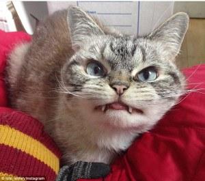 Conoce a Loki, el felino feroz cuyo aspecto parece la reencarnación de Drácula.