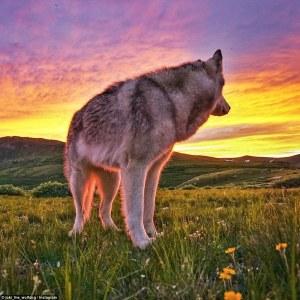 La llamada de la selva: Fotógrafo realiza una maravillosa sesión de fotos a su mejor amigo, un perro lobo que obedece al nombre Loki, de sus increíbles aventuras al aire libre.