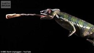 Fascinante video en cámara lenta que revela cómo capturan los depredadores de la naturaleza y devoran a sus presas