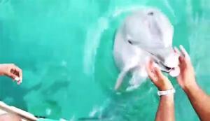 Un delfín devuelve a su dueña el celular que se le cayó al mar