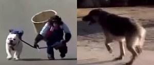 Un mono saca a pasear a un bulldog, pero en el camino son sorprendidos por un pastor alemán