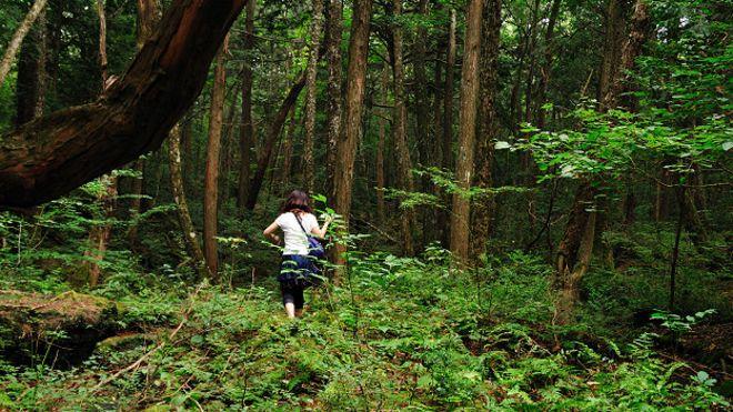 160112232027_japan_aokigahara_forest_624x351_juliancolton_nocredit