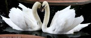 Sesión fotográfica muestra que realmente el amor está por todas partes en el reino animal