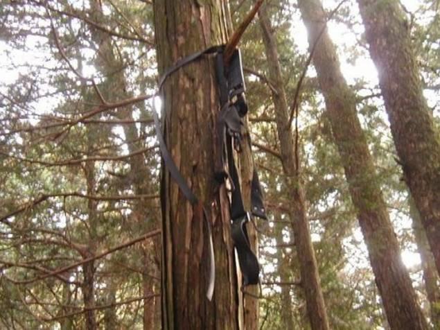 Restos-de-los-suicidios-en-Aokigahara