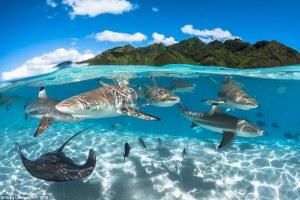Las mejores fotografías subacuáticas del año.
