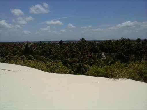 Pacote 4 (Mangue Seco, Praia do Forte, Ilhas)
