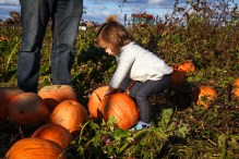 pumpkin-patch-94