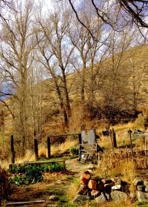 Photo of garden, trees and hills
