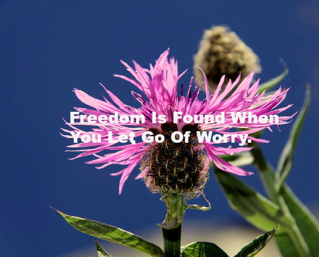 Freedom Is Found When You Let Go Of Worry.