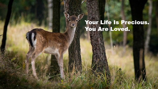 Your Life Is Precious. You Are Loved.