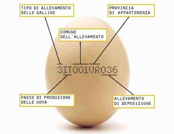 uova-in-gravidanza