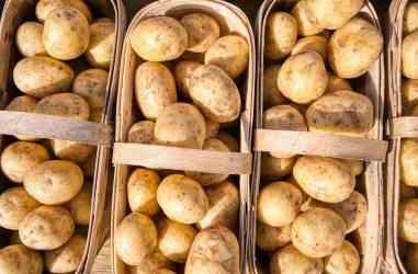 tutto sulle patate