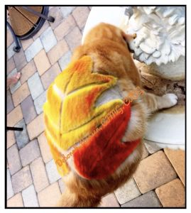 Fall Leaves by Deborah Hansen, CFMG, CFCG, creative cat grooming
