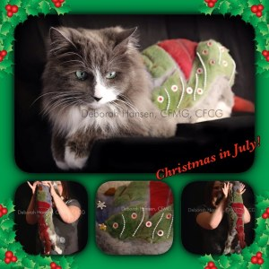 Christmas in July by Deborah Hansen, CFMG, CFCG, creative cat grooming