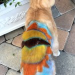 Sunny, by Deborah Hansen, CFMG, CFCG, creative cat grooming