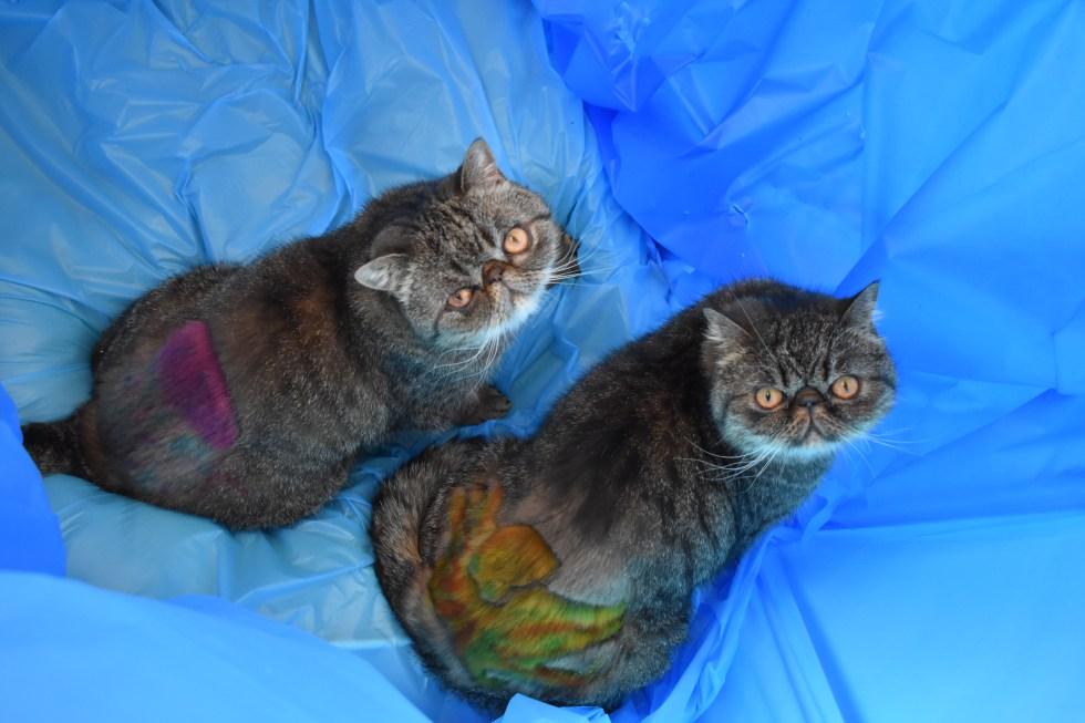Under the Sea, by Deborah Hansen, CFMG, CFCG, creative cat grooming