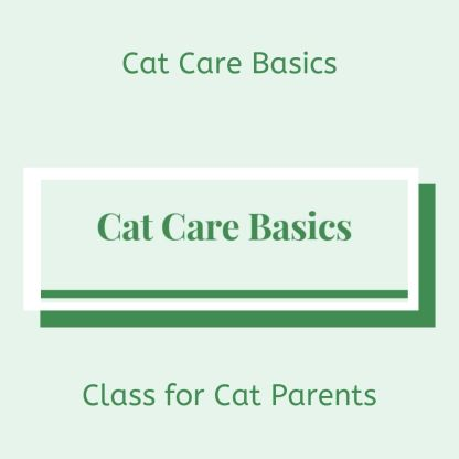 Cat Care Basics