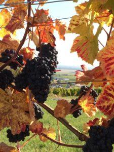Autumn In the Alsatian vineyards. ©Deborah L. Jacobs