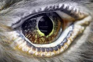 APEX eye logo
