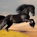 Wild Horses Running Free Sarah Lovett Workshop 4 Deborah Rice Writer
