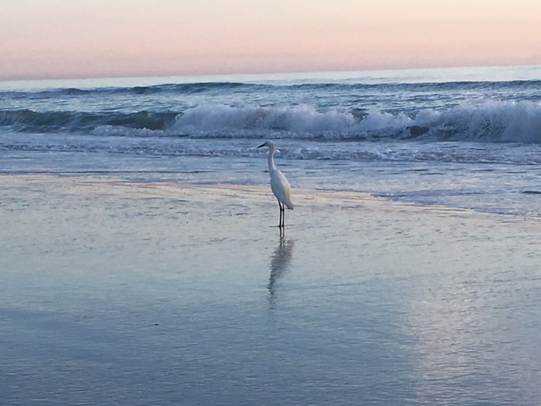 Ocean Crane